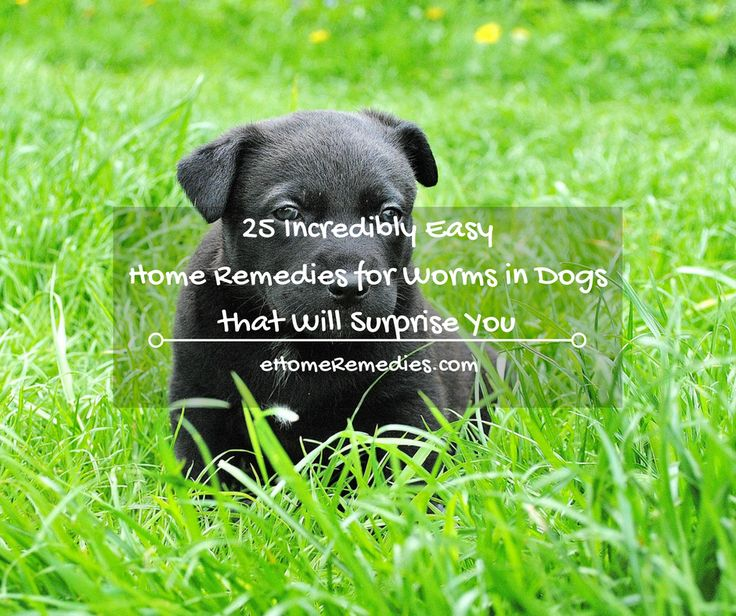186 Best Images About Ess Oils For Dogs On Pinterest