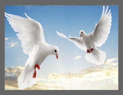 A1 Canvas Print ( White Doves ) ( Print Only )