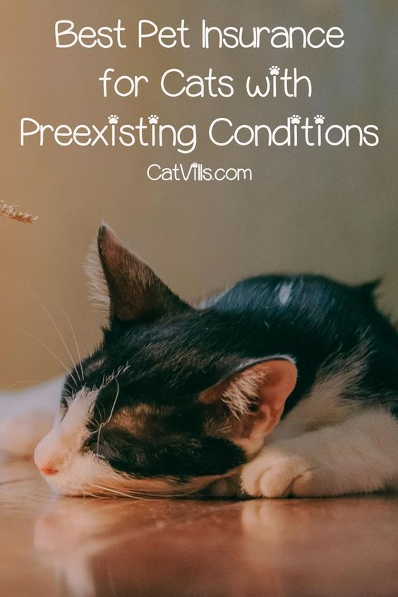 Top 3 Best Pet Insurance For Cats With Preexisting Conditions Catvills Pets Sick Pets Best Pet Insurance