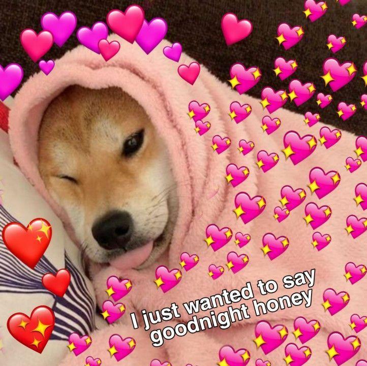 Pin By Robii On Doggo Cute Memes Cute Love Memes Goodnight Cute