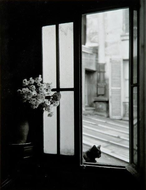Willy Ronis Le chat derrière la vitre, Gordes, 1957