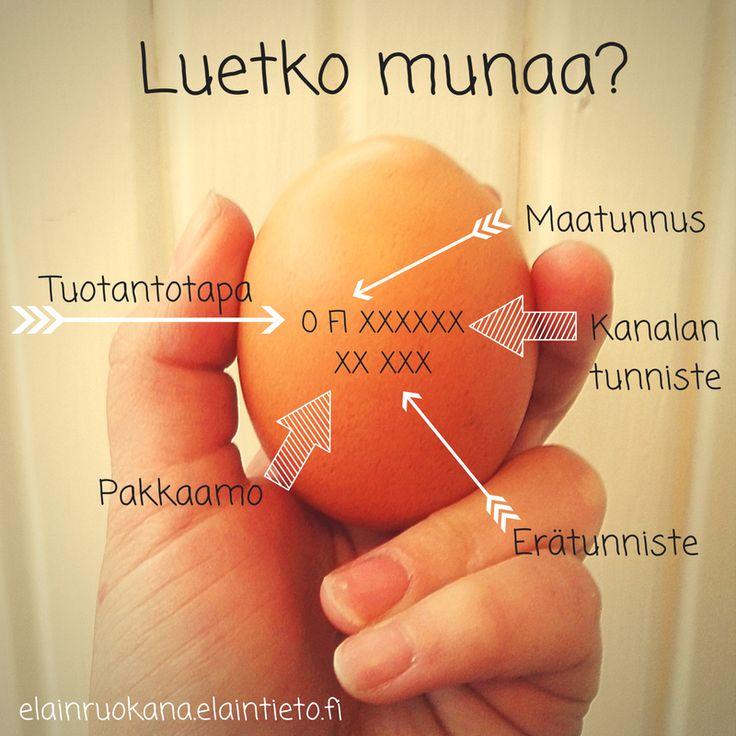 Miten munasi muninut kana on elänyt? Totuus löytyy munasta. Opi lukemaan munaa: ensimmäinen numero kertoo tuotantotavan.