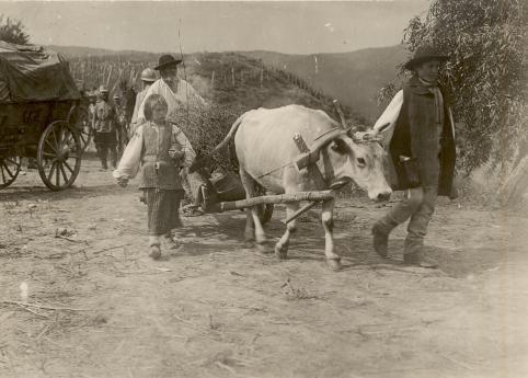BU-F-01073-1-08739 Refugiaţi în drum spre casă. Mărăşeşti, 1917.07.12 (niv.Document)