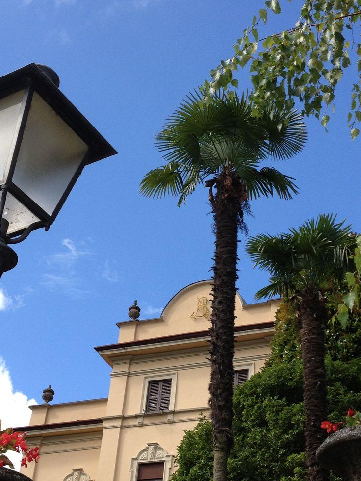 Palm Como Italy