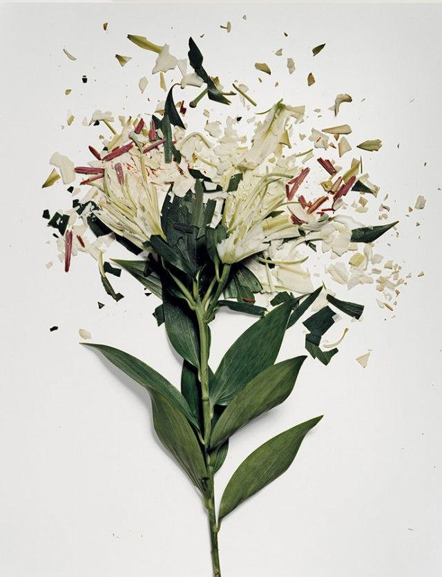 Love this: Flowers soaked in liquid nitrogen, spring-loaded to slam high-speed into a surface