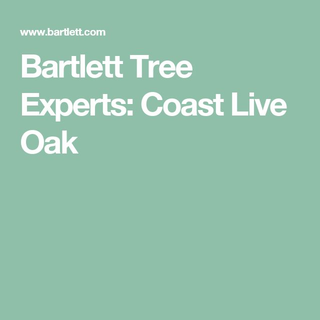 Bartlett Tree Experts: Coast Live Oak