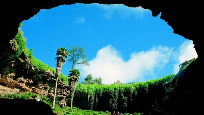 From the bottom ... the Umpherston Sinkhole gardens in Mount Gambier. Picture: SA Tourism Commission