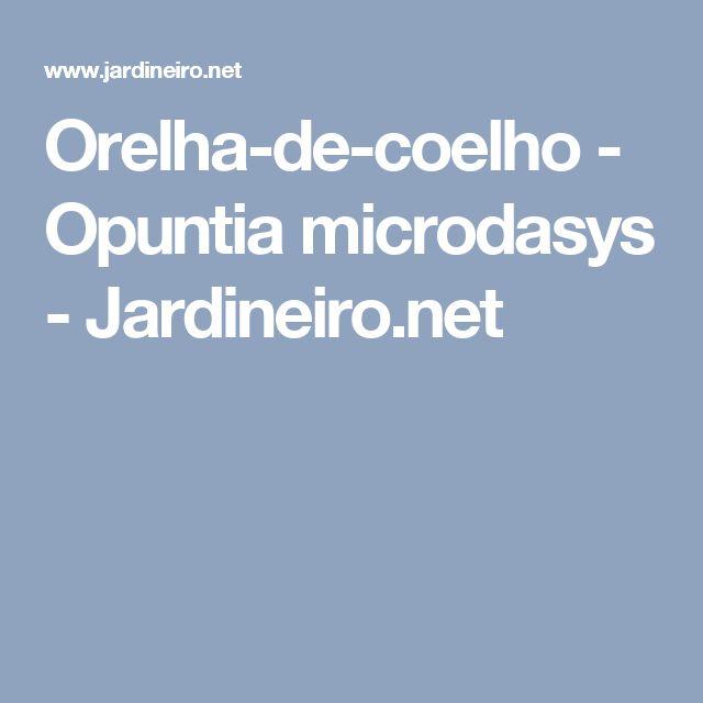 Orelha-de-coelho - Opuntia microdasys - Jardineiro.net