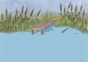 pond - background picture