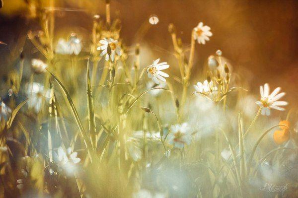 Немного весны Весна, цветение, природа, canon