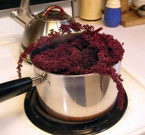We grow Hopi Dye Red Amaranth in our garden so I decided to make some ink out of the flowers.