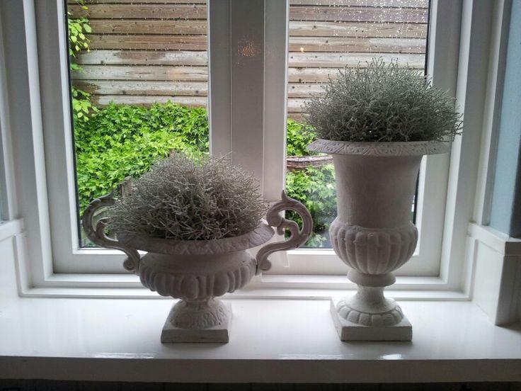 Franse potten, lichte plantjes erin! Voor keukenraam
