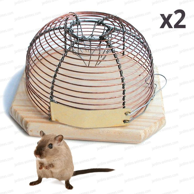 Attrapez les souris sans les tuer. Piège inoffensif. Relachez les dans les champs aux alentours. http://fr.jardins-animes.com/anti-souris-piege-petite-cage-lot-p-722.html