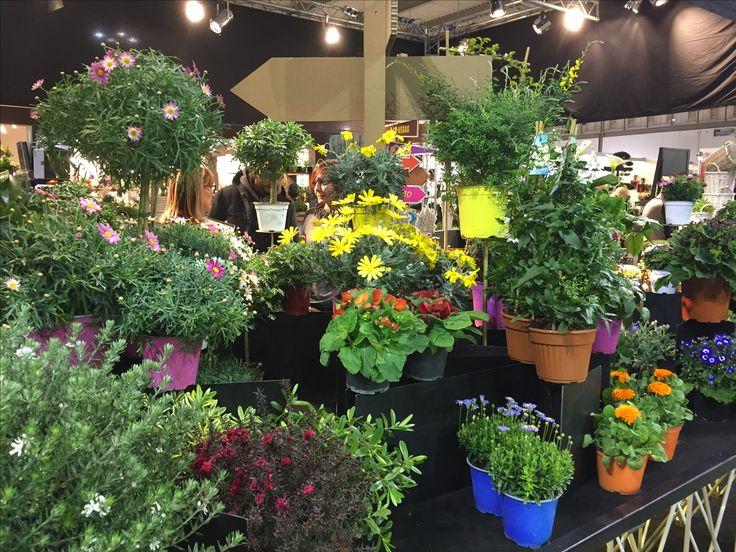 #MyPlant & Garden