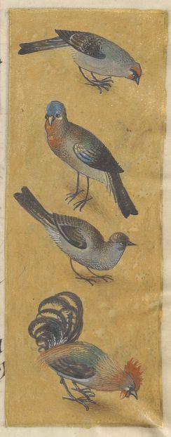 Livre d'heures, en latin et en français, à l'usage de Cambray Date d'édition : 1401-1500 Sujet : Lalaing (Isabelle de). Son livre d'heures