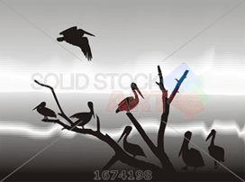 Black vector silhouettes pelicans on grey lake shore horizontal