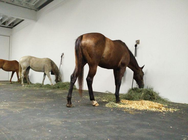 Jannis Kounellis's  Untitled (12 Horses) at Gavin Brown Enterprise, Greenwich Village.