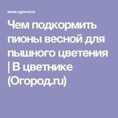 Чем подкормить пионы весной для пышного цветения   В цветнике (Огород.ru)