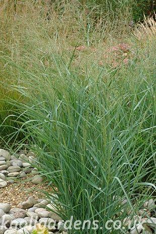 17 best images about garden on pinterest gardens garden for Ornamental prairie grass