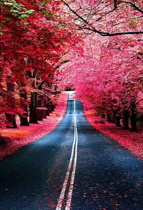 Would love to see this road!: Madrid Spain, Favorite Places, Nature, Color, Burgundy Street, Beautiful, Pink, Photo, Roads