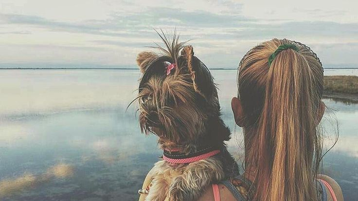 Voi e loro   Foto di @becca_the_yorkie . . #me #cane #dog #yorkshireterrier #yorkie #terrier #puppy #terrierlovers #doglover #happy #bausocial #lovedog #thumbsup #yorkshire #beautiful #amazing #followme #beautiful #dogstagram #instadog #insta_dog #dogoftheday