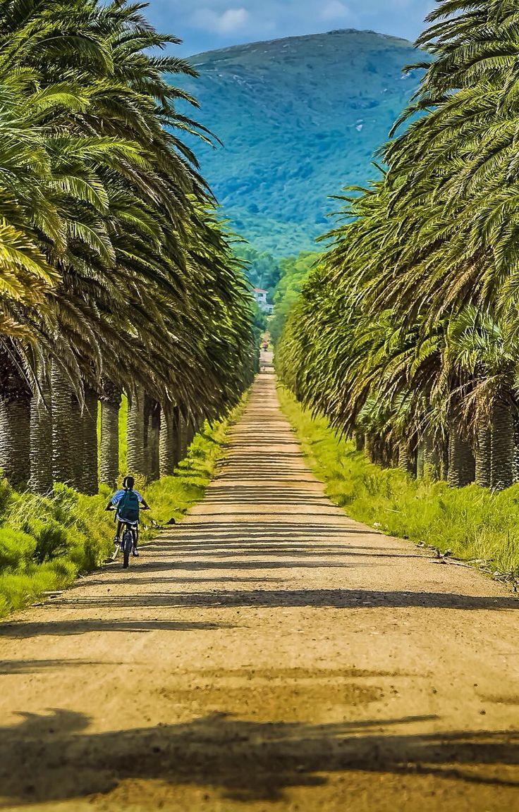 Punta del Este, Maldonado, Uruguay. La fota tiena mucho arboles tropical. La persona en el bicecleta es viaje en la carretera.