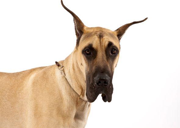 Dog Breeds That Barely Bark