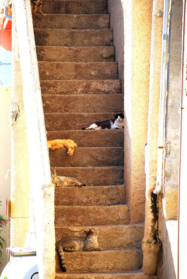 Chats de Corse by Esther van Gerwen