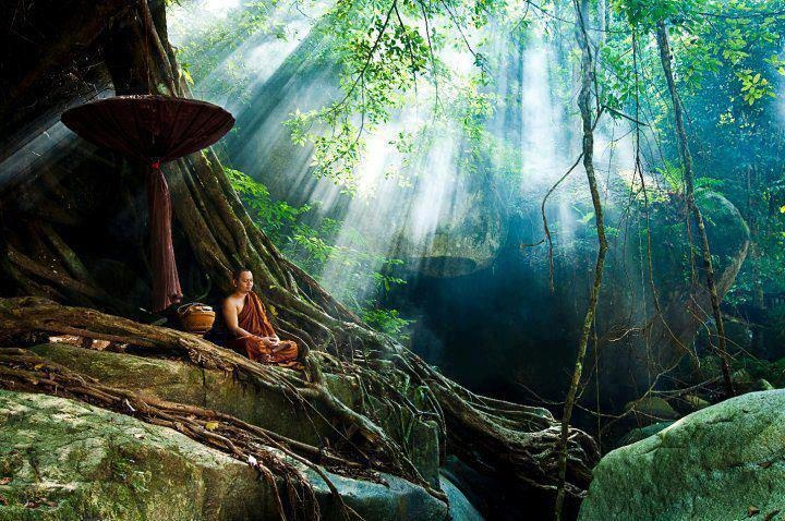 """~Meditation Defined~  """"To define meditation without a lot of words and phrases, we can simply say: Don't cling or hold on to anything. Harmonize with actuality, harmonize with things as they are.""""  ~ Ajahn Chah"""