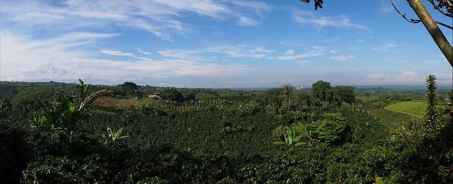 #Colombiaenmadrid Panorámica Plantación de café Eje Cafetero Bosque del Saman P5262110  by Vagamundos.net/Carlos Olmo, via Flickr