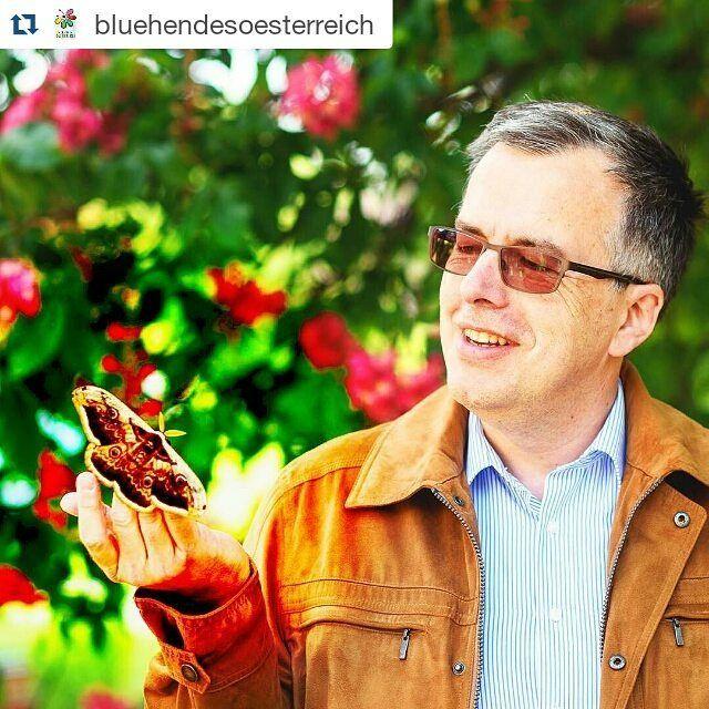 """Die Initiative der REWE-Gruppe """"Blühendes Österreich"""" verfolgt ein klares Ziel: den Erhalt und die Förderung bedrohter Lebensräume wie Wiesen Aue oder Moore. Denn diese bieten Lebensräume für Schmetterlinge und andere bedrohte Tier- und Pflanzenarten. #billa #billa_at #igersaustria #igersvienna  #Repost @bluehendesoesterreich with @repostapp  Schmetterlingsforscher Peter Huemer in seinem Element. http://ift.tt/20RviXq #bluehendesoesterreich #wirbluehenauf #schmetterling #falter #butterfly…"""