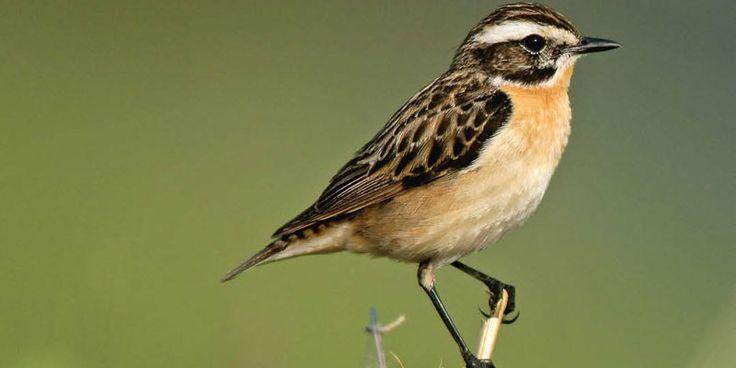 Ein neuer Naturschutzstandard für ökologisch bewirtschaftete Betriebe zur Förderung der Artenvielfalt