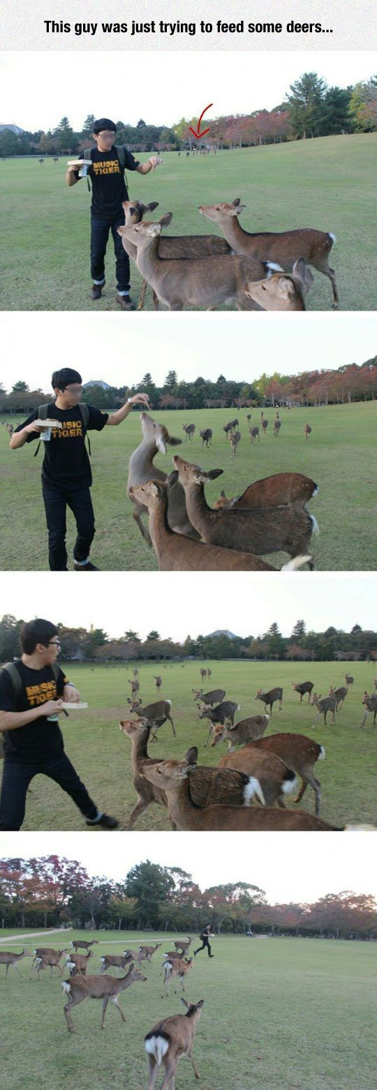 Guy trys to feed deer in Tennessee then gets swarmed