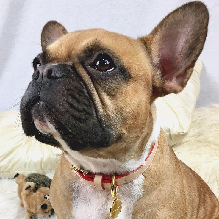 Please... Bulldog puppies, Cool pets, French bulldog