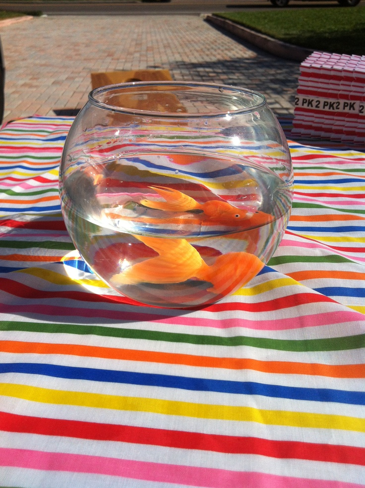 how to win the goldfish carnival game