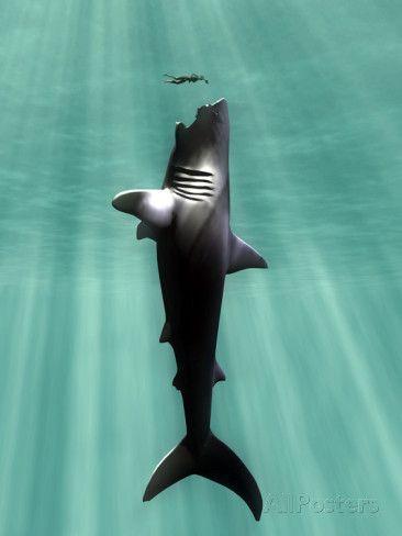 Megalodon Prehistoric Shark with Human