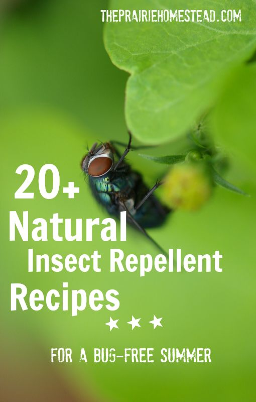 20 homemade insect repellent recipes gardens facts of - Natural insect repellent for gardens ...