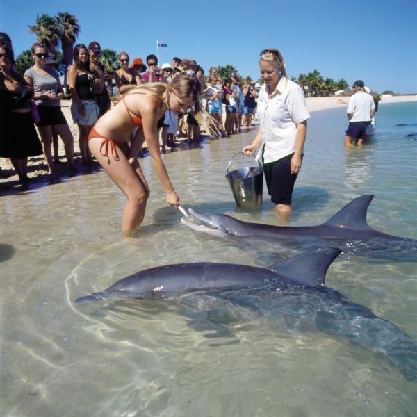 Feeding the dolphins at Monkey Mia, Shark Bay, WA