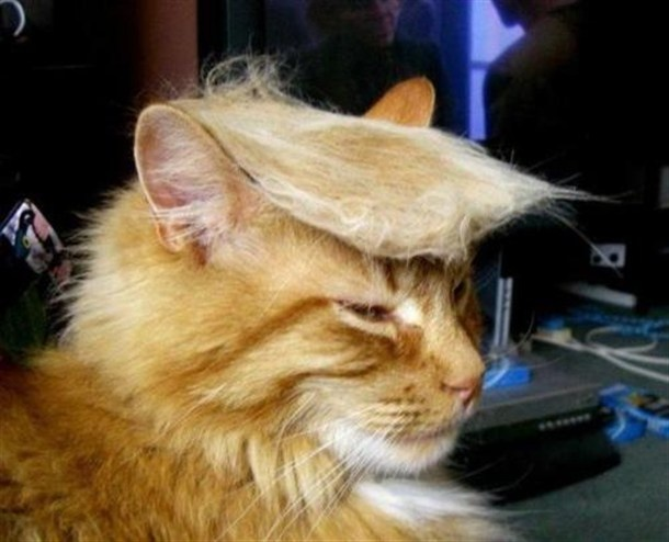 donald trumps cat...YOU'RE FIRED!!