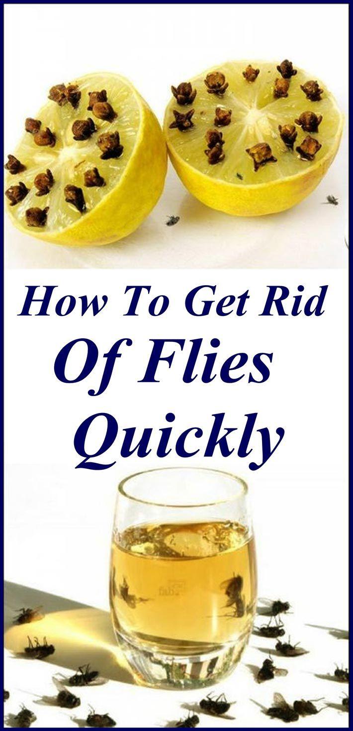 5ed2416cb76f862d7b70b462ad2035fd - How To Get Rid Of Fruit Flies In Garage