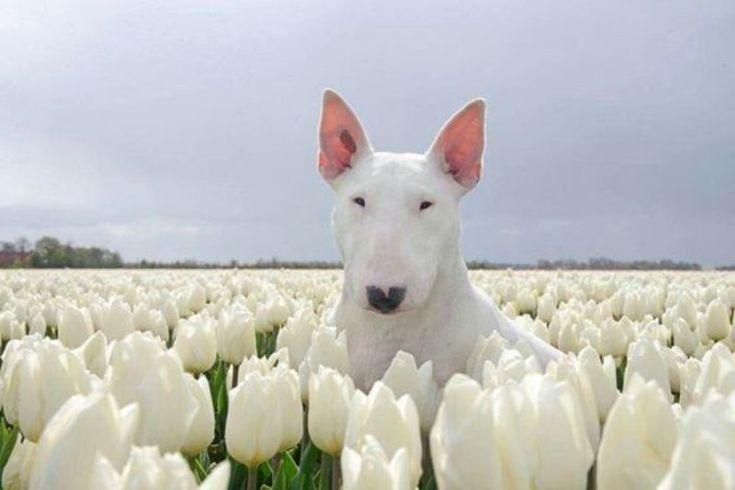 Собачьи портреты: такие разные и такие похожие