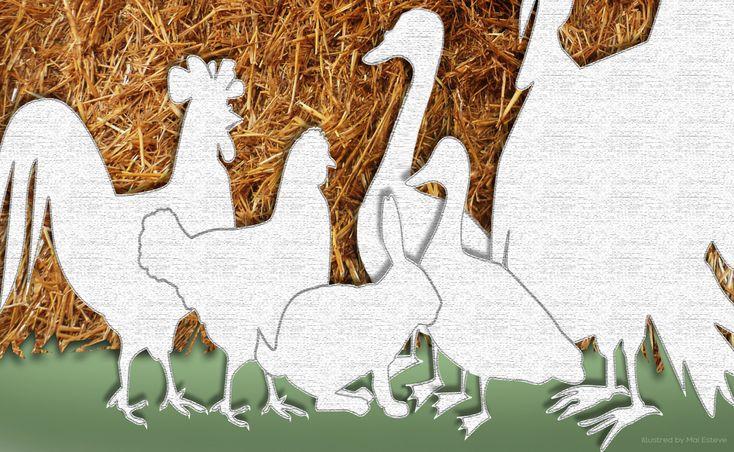 Si celebra oggi nel Calendario del Cibo Italiano la Cucina dell'Aia, laddove per aia si intende la preparazione di galline, polli, anatre tacchini e conigli