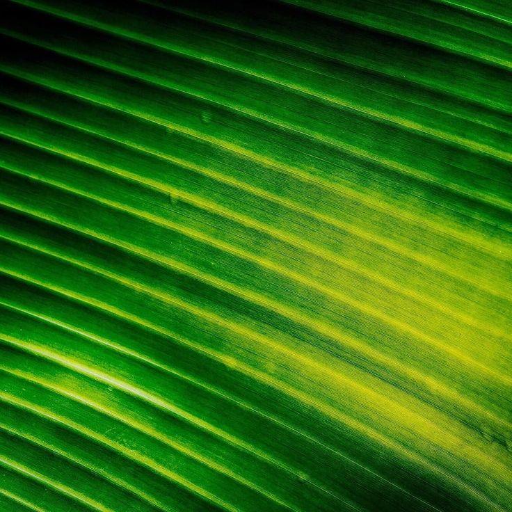 Verde      #TakeMeToTahiti #tahiti #frenchpolynesia #lovetahiti #tahitianvibes @airtahitinui @tahititourisme  #verde #green #bestplacestogo #forevergreen #travelphotographer  #traveldeeper #greens #letsgosomewhere #welltravelled #travelmemories it_today #passionpassport@tinyatlasquarterly #mytinyatlas@ourplanetdaily #ourplanetdaily  #olympuscamera #olympusomd #olympusinspired #olympusomdem1markii