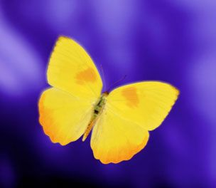 Yellow Butterfly – why did you hover over us at a wedding of our dear friends? I don't put my trust in any spirit or ghost but the Holy Spirit, ...