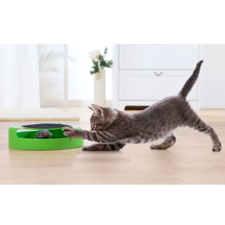 """Hra pro kočky """"Ulov myš""""   Magnet 3Pagen #magnet3pagencz #3pagen #animals"""