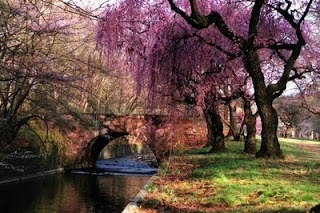 Branchbrook Park, Newark, NJ. A great place to go with the girl you love.