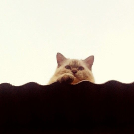 cat on the roof~ meow~