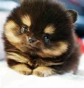 this dog is a cute amazing lil puppy plz follow me!!!!