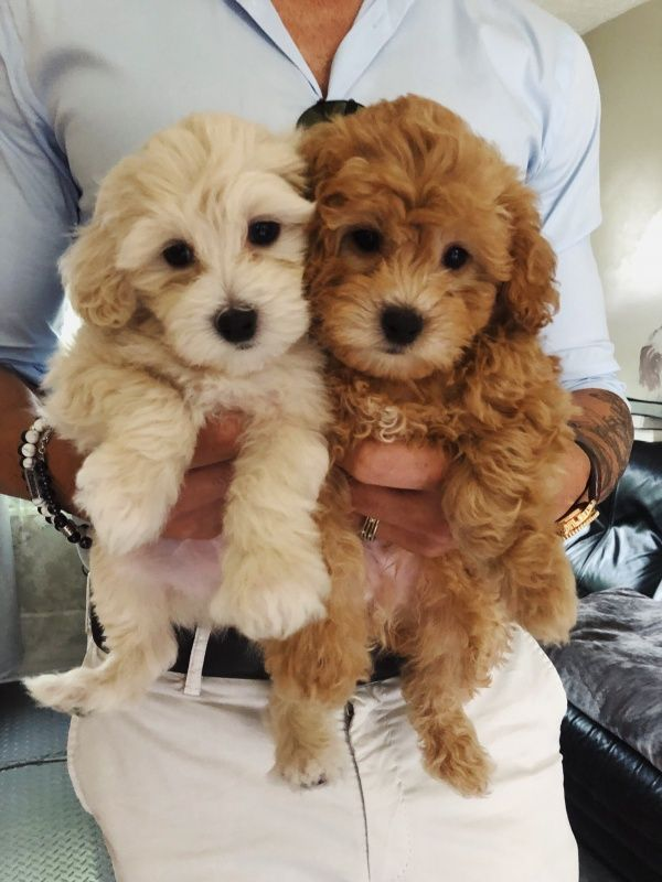 Zeus And Frodo Lucascolangelo Cute Dogs Cute Baby Animals Cute Dogs And Puppies