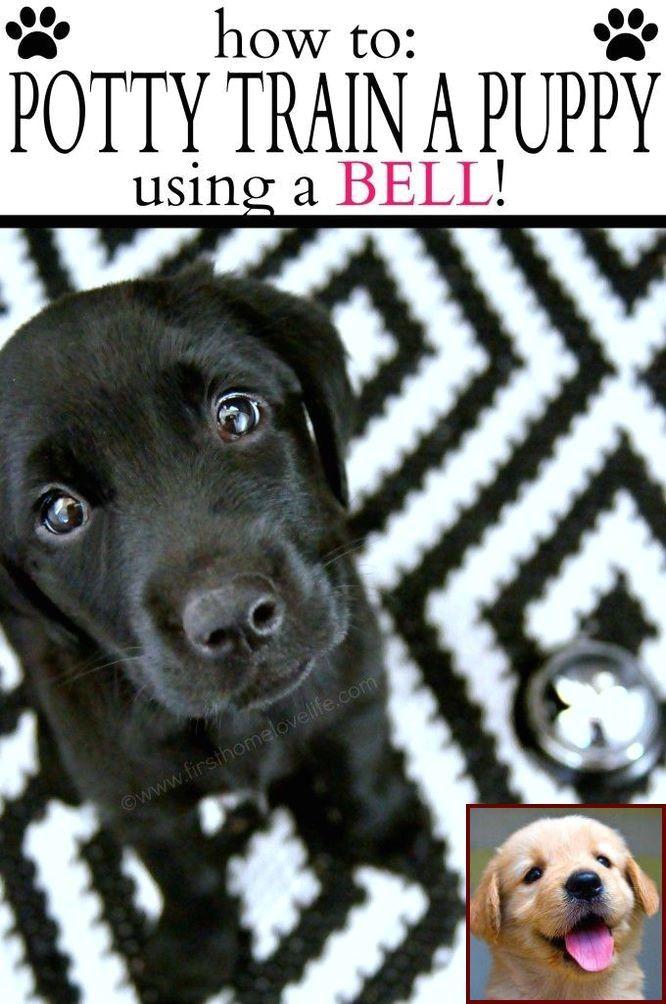 Yorkie Dog Behavior And Dog Training Courses In Tamilnadu Puppy Training House Training Puppies Dog Clicker Training